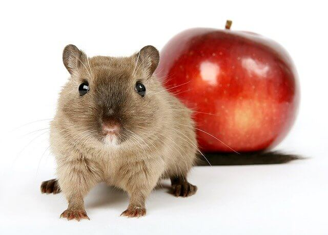 AppleのMac製品とトラックボールマウスの相性